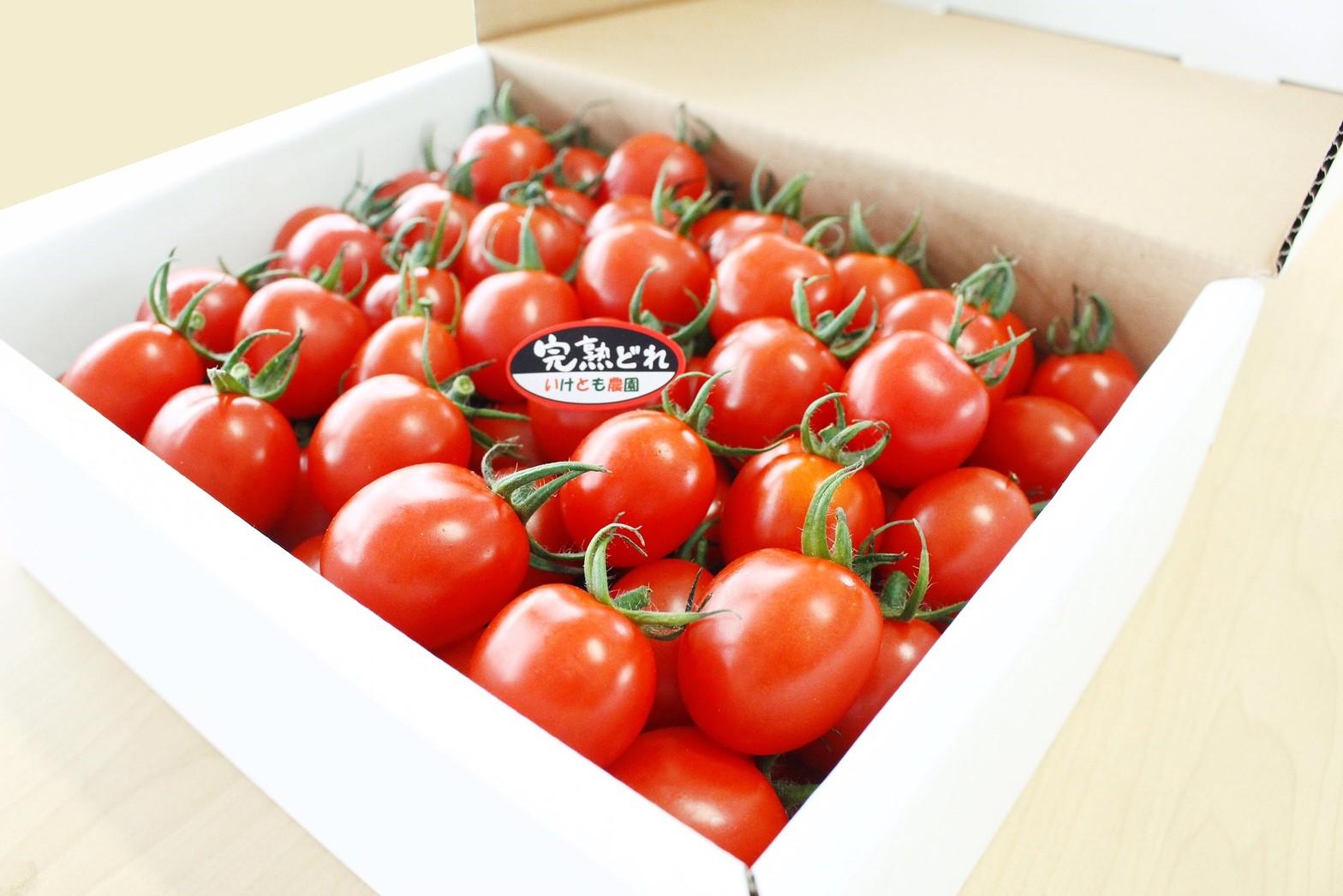 tomato03